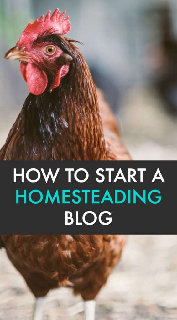 Learn how to start a homesteading blog with this tutorial! If you're wondering how to make money homesteading, this is one of the ways!