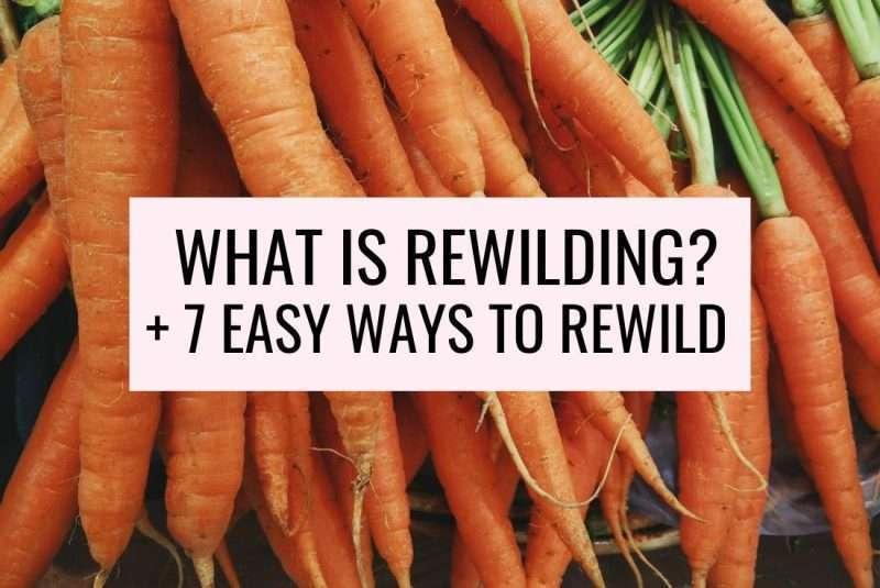ways to rewild yourself what is rewilding